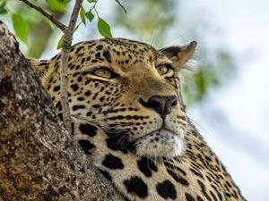 Masai Mara Budget Safari, Tours & Trip Kenya Fotos