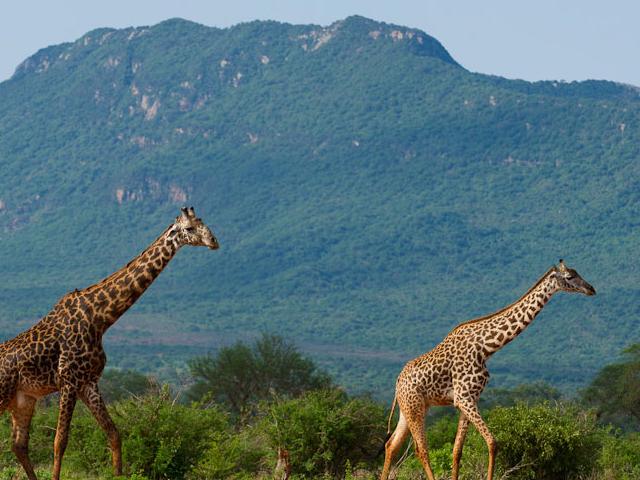 Tsavo East Safari Photos