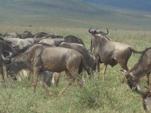 Tanzania Wildlife Safari And Walking Safari Photos