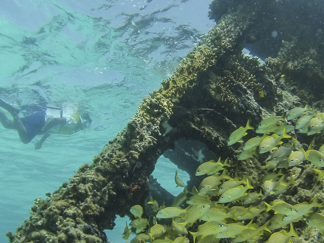 4 Stops Snorkeling Tour in Cancun Photos