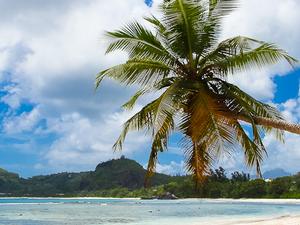 Relaaaaxxx on the Lovely Beaches of Seychelles