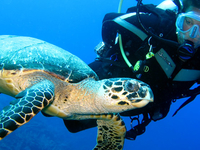 Stay and Dive Packages
