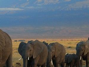 Masai Mara, Lake Nakuru and Amboseli Tour Photos