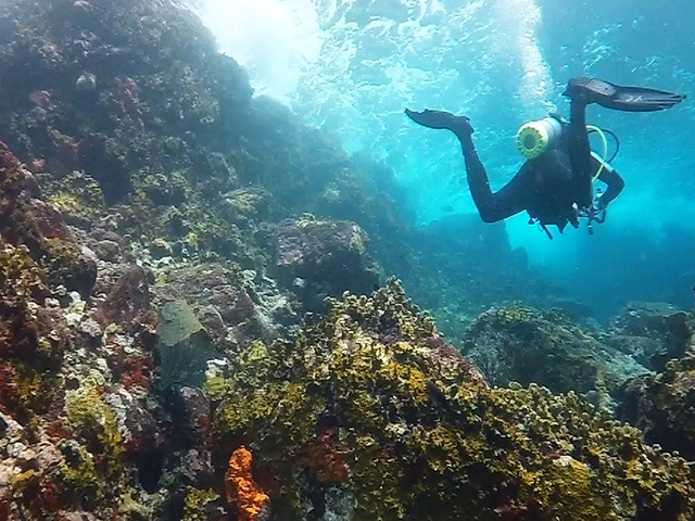Carriacou Two Tank Dive Package Photos