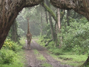 Arusha National Park Fotos