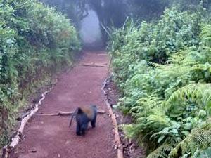 Kilimanjaro Trekking Day Trip Photos