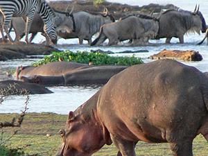 Lake Manyara National Park Fotos