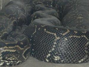 Meserani Snake Park Fotos