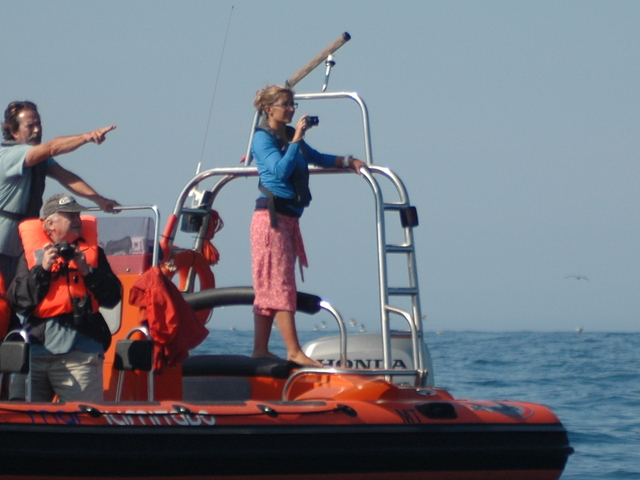 Birdwatching Boat Trip Photos