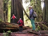 Custom Guided Tours of Redwood National and State Parks