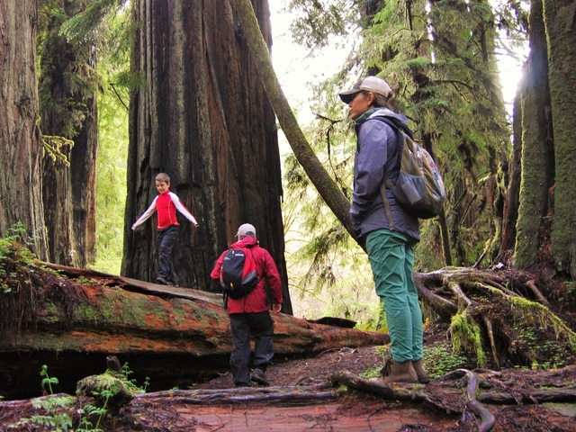 Custom Guided Tours of Redwood National and State Parks Photos