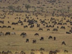 Jambo Kenya Tour Photos