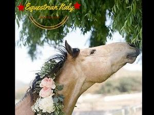 Trekking and Tasting on Horseback Photos
