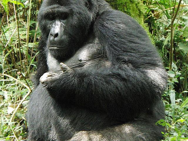 Uganda Gorilla Safari Adventure Photos