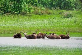 Nature Adventure Kolkata City of Culture & Wildlife