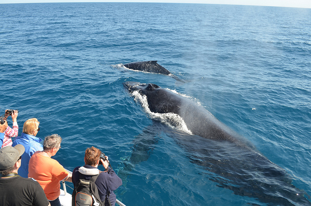 Whale Watching and Romantic Holiday Photos