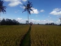 Bali Privatebike