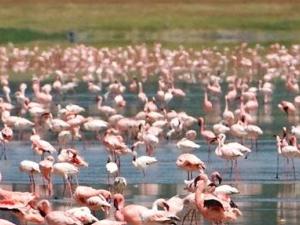 Tanzania Camping Safari Photos