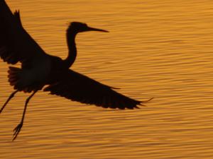 Florida Birds Photo Tour Fotos