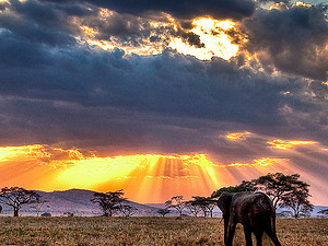 4 Day Tanzania Camping Safari Photos
