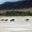 Wildebeest In The Ngorogoro Crater 640 480