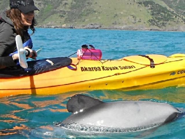 Sea Kayaking & Cape Point Photos
