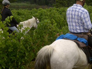 Exclusive Horseback Winelands Tour Photos