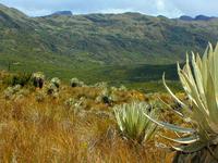 Chingaza Natural Reserve