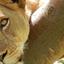 Savanna Wildlife And Mountain Gorillas Tour