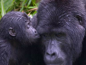 8 Days Primate Safari Fotos