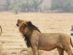 Best of Zambia Safari - Lower Zambezi & South Luangwa Photos