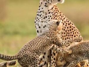 Classic Bush Safari Adventure Photos