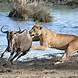 Amboseli National Park - Budget Camping Safari