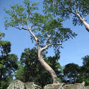 Taphrum Temple