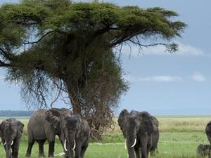 Adventurious 6 Days Kenya budget camping Safari Fotos