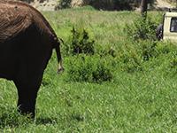7days Safari