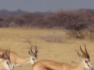 Explore Botswana Photos