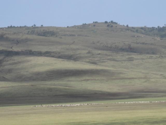 Day Trip to Ngorongoro Crater Photos