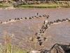Maasai Mara Wildebeest Migration Safari