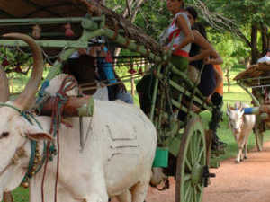Home Stay Private Tour - Sri Lanka Fotos