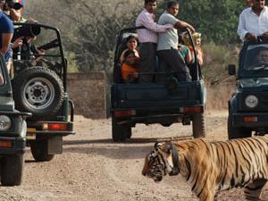 Tiger Safaris Photos
