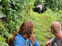 Gorillas and Lions Wildlife Safari Uganda
