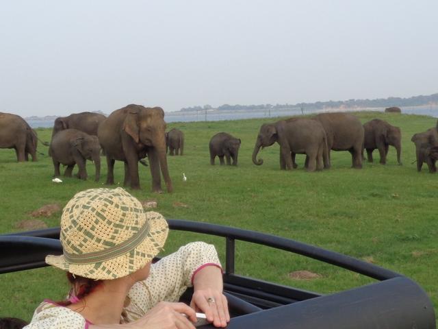 Elephant Gathering Jeep Safari in Minneriya Park - 1 Traveler Photos