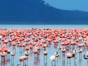 Lake Nakuru Express Photos