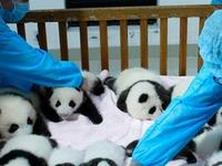 Chengdu Panda Travel Www.westchinago.com