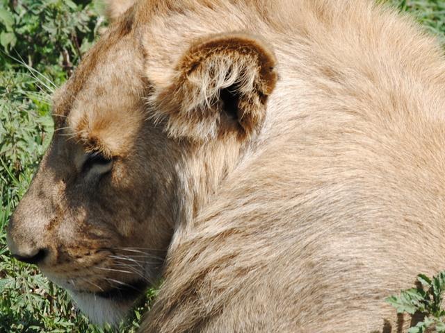Wonders of Tanzania Safari Photos