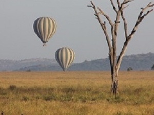 Ample Tanzania Safari Incl. Hot Air Ballooning Photos