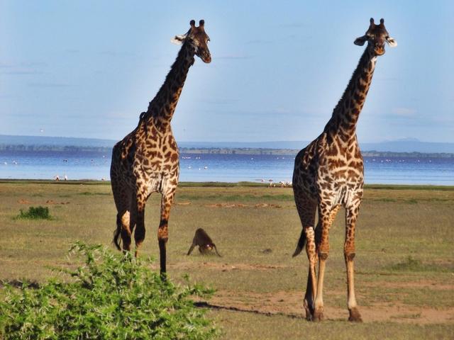 Classic Safari Adventure Photos