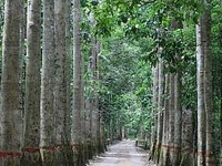 Lawachara National Forest