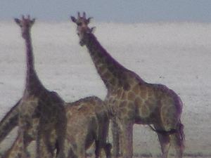 Etosha Luxury Tour Photos